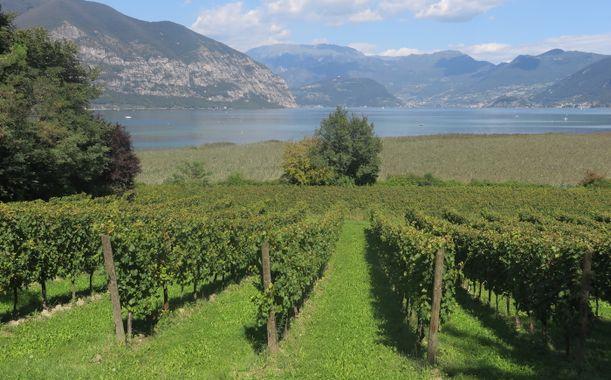 117 vignobles famillaux à visiter dans la région de Franciacorta